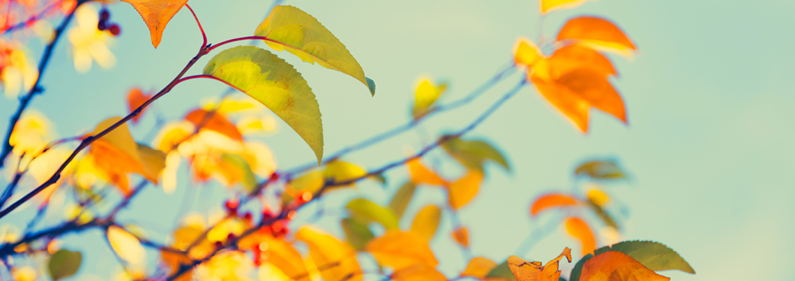 Autumn_leaves_RGB_banner_1140x403px3