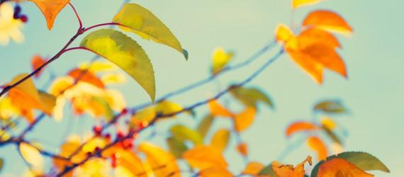 Autumn_leaves_RGB_banner_1140x403px3