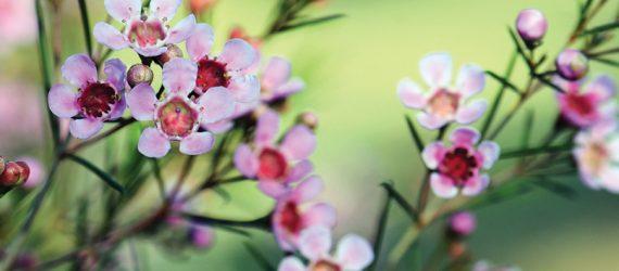 51f5069739d3ab03aae1929c72cc415d14a8c9f9-2009_flowers_rgb