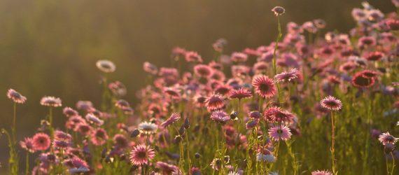 7819f0726826b568584ccbbc0e3749f6bbdaaa72-2109_RGB_wildflower-afternoon